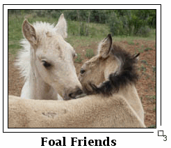 Foal Friends