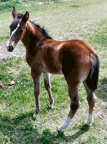 A 2018 foal from Box Hanging Three Ranch